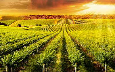 Vineyards For Sale